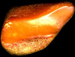 Amber from the Baltic Sea 3