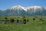 Carson Valley Pastoral