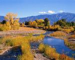 Fall Colors at the Carson River