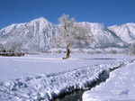 Winter in Carson Valley